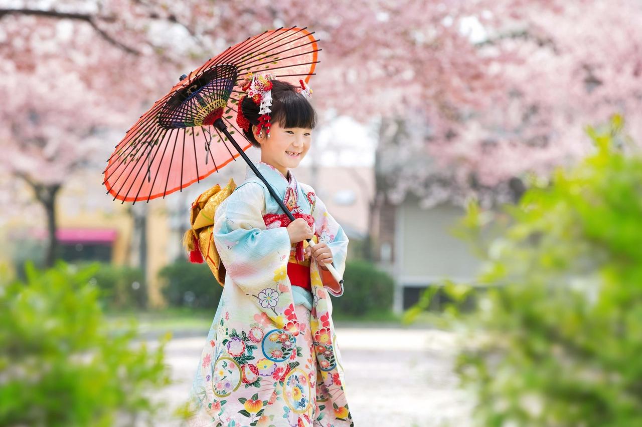 公園の満開に咲く桜のもとで女の子の七五三写真