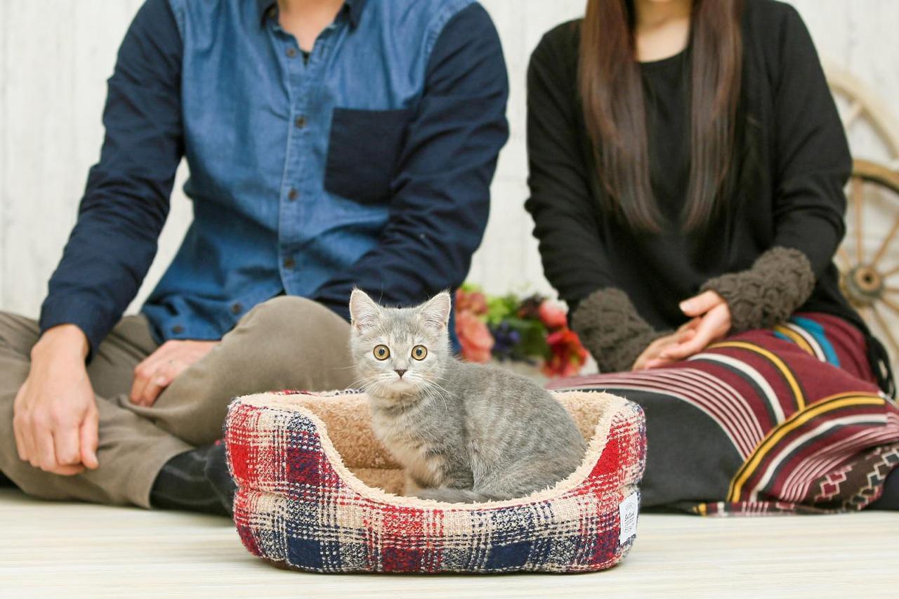 夫婦の間でくつろぐネコの写真