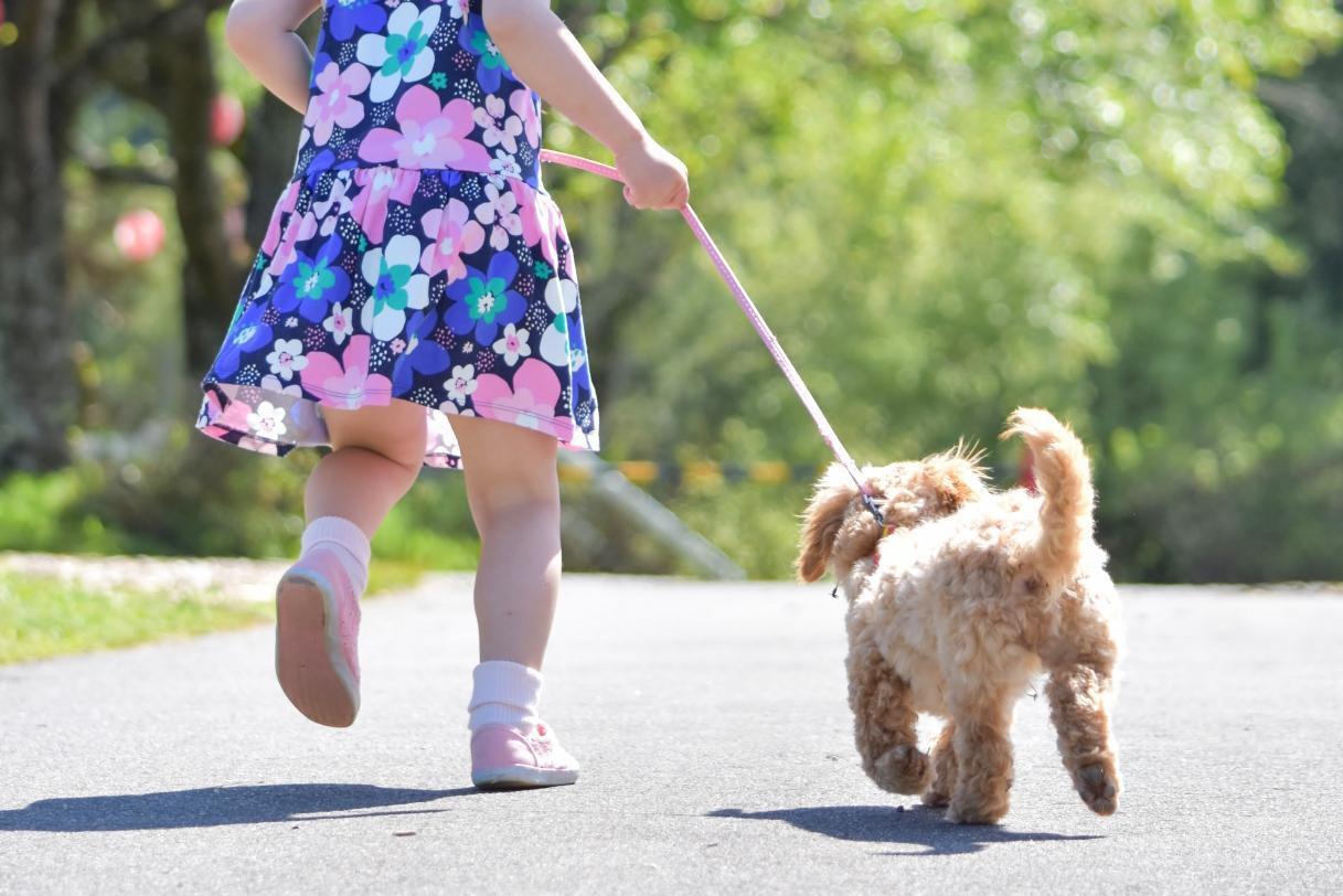 女の子とペットの犬が一緒に走っている写真